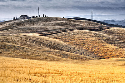 Fields in Tuscany - p416m990797 by Thomas Schaefer