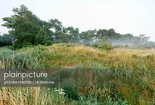 Landschaft am Mühlenbach, Ostseebad Kühlungsborn, Mecklenburg-Vorpommern, Deutschland - p1316m1160700 von Ulf Böttcher