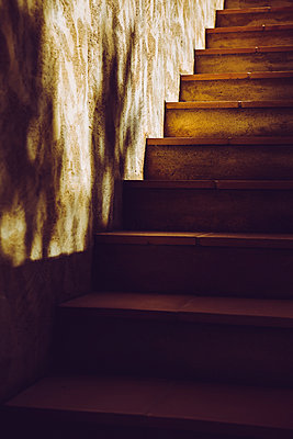 A set of stone stairs leading up to a dark house in warm summer evening light. - p1057m2020714 by Stephen Shepherd
