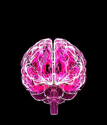Gehirn - p1275m2168742 von cgimanufaktur