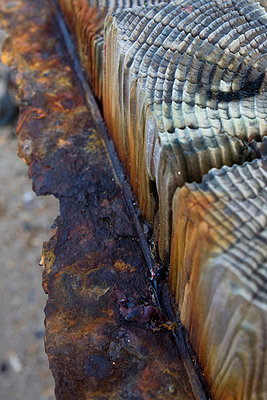 Corroded Wood - p6692515 by Peter Kelly