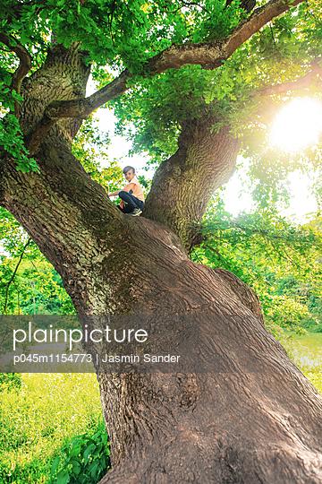 Junge sitzt auf gewaltigem Baum - p045m1154773 von Jasmin Sander