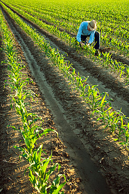 Agriculture - A farmer (grower) examines early growth grain corn plants at the 6-7 leaf stage in early morning light / near England, Arkansas, USA. - p442m961438 by Bill Barksdale
