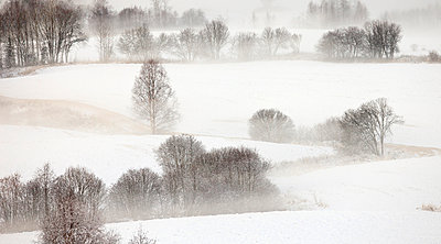 Bare Trees On A Snow Covered Landscape - p816m913541 by Kai Jensen