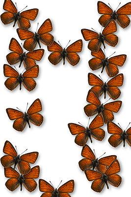 Schmetterlingscollage - p4150639 von Tanja Luther