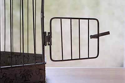 Birdcage with open door - p564m1074315 by Dona