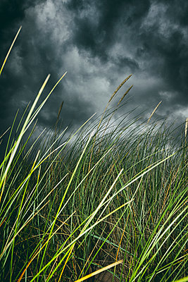 Stormy weather beach grass clouds close-up detail - p609m1490711 by WRIGHT