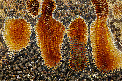 Bienenwabe - p250m1090947 von Christian Diehl