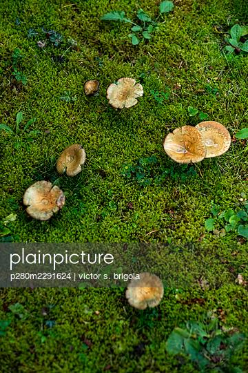 Pilze im Moos - p280m2291624 von victor s. brigola