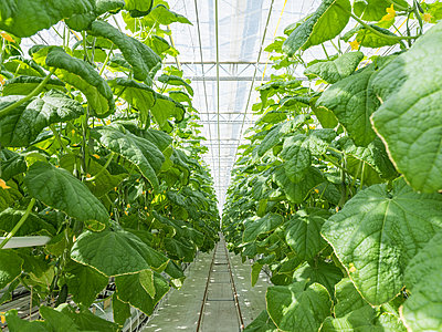 Greenhouse for the artificial and self-sufficient cultivation of vegetables - p390m2053566 by Frank Herfort