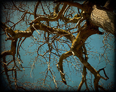 Branches - p1072m829158 by Kevin Mallia