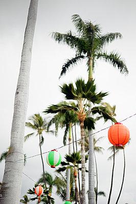 Lampions und Palmen, Honolulu, Oahu, Hawaii - p1196m1128153 von Biederbick & Rumpf