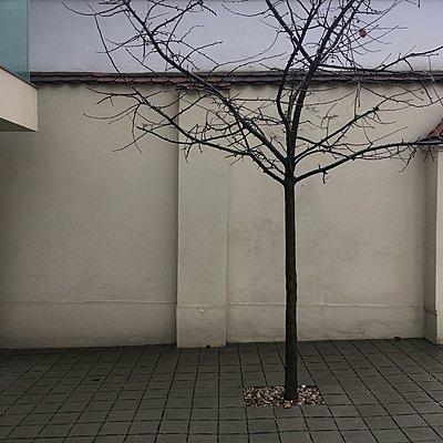 Österreich, Wien, Baum in einem Hinterhof - p1401m2237568 von Jens Goldbeck