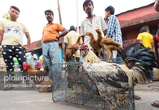 Tiermarkt Kolkata - p1208m1159420 von Wisckow