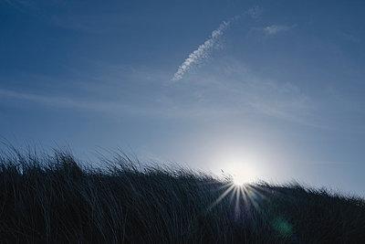 Bech grass in backlit - p586m2089151 by Kniel Synnatzschke