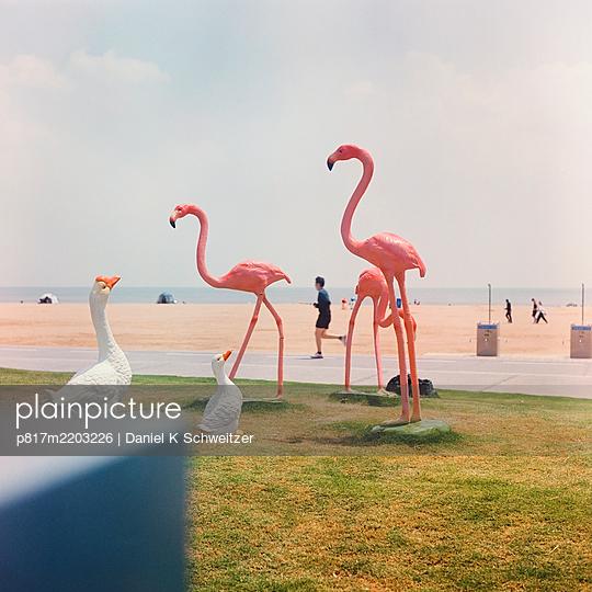 China, Qingdao, Künstliche Flamingos und Gänse am Strand - p817m2203226 von Daniel K Schweitzer