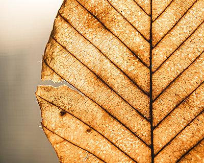 Close-up of dry leaf - p1166m1577353 by Cavan Social