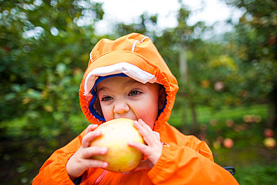 Toddler eating apple, Abbotsford, British Columbia, Canada - p1166m2202089 by Christopher Kimmel / Alpine Edge Photography