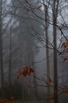 Leaves in the mist - p1228m1193766 by Benjamin Harte