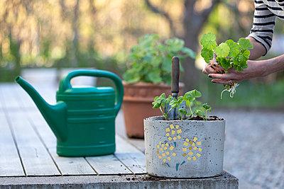 Woman planting flower - p312m2051730 by Ulf Huett Nilsson