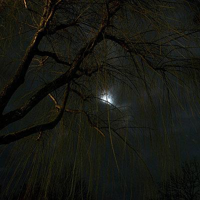 Darkness - p9111468 by Gaëtan Rossier