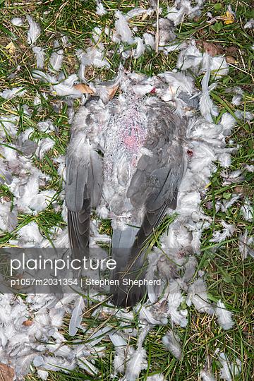Toter Vogel - p1057m2031354 von Stephen Shepherd
