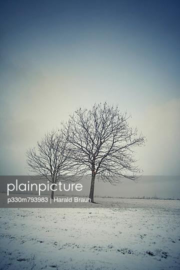 Bäume im Wintersturm - p330m793983 von Harald Braun