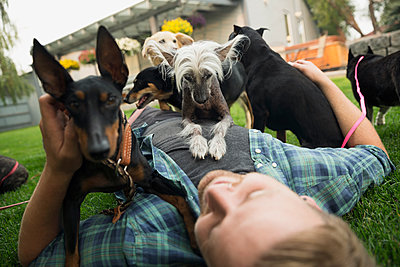 Dogs laying on top of man in grass - p1192m1078261f by Hero Images