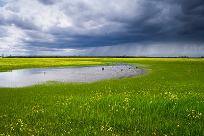 Agriculture, A fallow field in early spring flooded by excessive rain with a storm in the distance, near Corning, Tehama County, Northern California, USA. - p442m936620f by Kathy Coatney