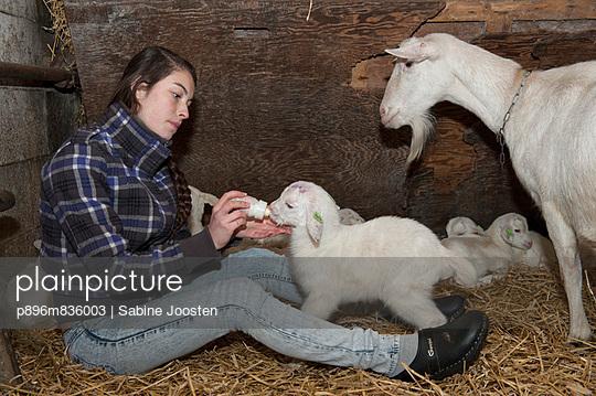 Kid goat - p896m836003 by Sabine Joosten