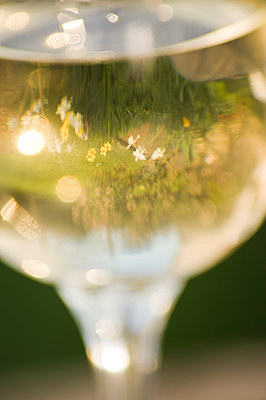 Summer meadow reflected in a glass of white wine. - p1433m1531925 by Wolf Kettler