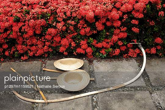 p1297m1159521 von Nathalie Seroux