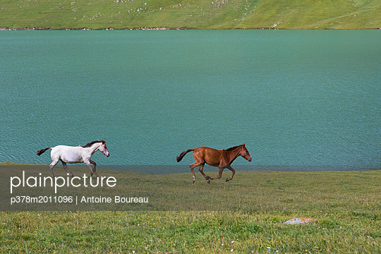 Horses galloping - p378m2011096 by Antoine Boureau