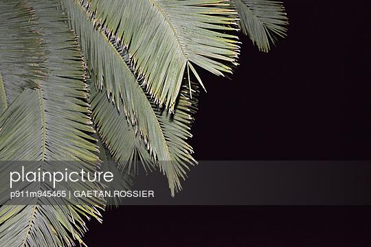 Palm - p911m945465 by Gaëtan Rossier