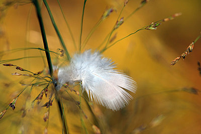 Feather - p1016m741418 by Jochen Knobloch