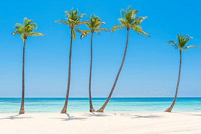 Juanillo Beach (playa Juanillo), Punta Cana, Dominican Republic. Palm-fringed beach. - p651m2006864 by Marco Bottigelli