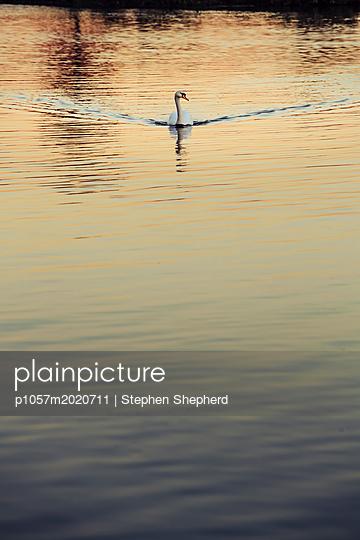 p1057m2020711 von Stephen Shepherd