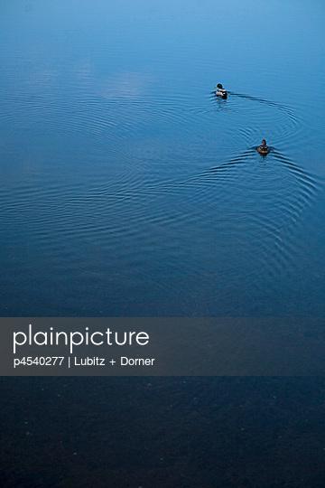 Schwimmende Enten - p4540277 von Lubitz + Dorner