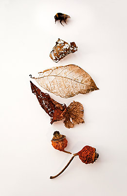 Dried up insects and leaves - p580m1161382 by Eva Z. Genthe
