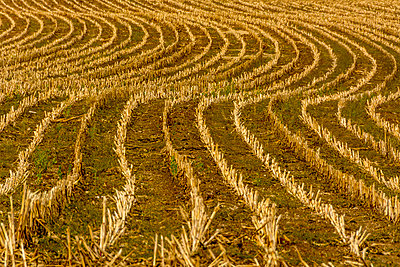 Stubble field - p813m1481225 by B.Jaubert