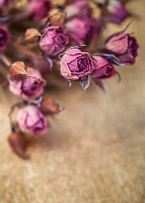 Wilted roses - p971m1124439 by Reilika Landen