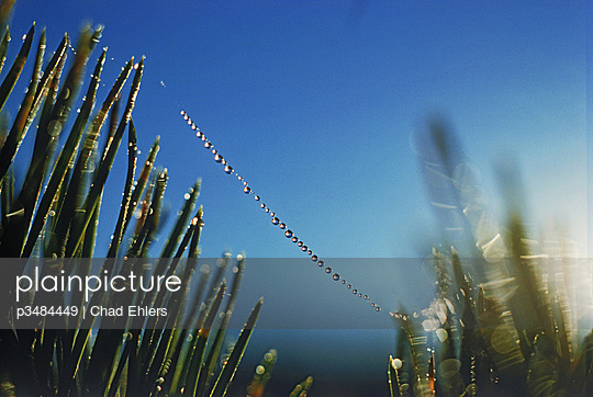 Dewdrops suspended on single spider strand at sunrise - p3484449 by Chad Ehlers