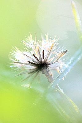Flower - p2351364 by KuS