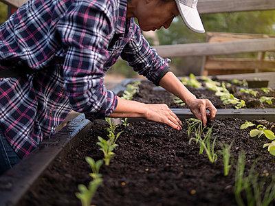 Australia, Melbourne, Woman planting seedlings at community garden - p924m2283082 by Elke Meitzel