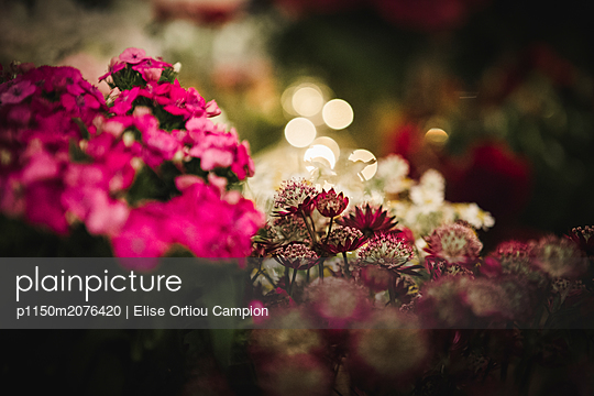 Different flowers - p1150m2076420 by Elise Ortiou Campion