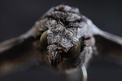 Dead Moth (II) - p1072m829248 by Neville Mountford-Hoare