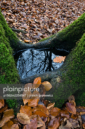 Water Puddle and Leaves in Autumn Tree Hollow - p1562m2254547 by chinch gryniewicz