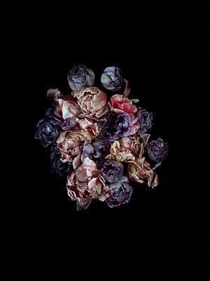 Tulpen - p1294m1559429 von Sabine Bungert