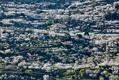 Cherry blossom in Jerte valley - p719m1563579 by Rudi Sebastian