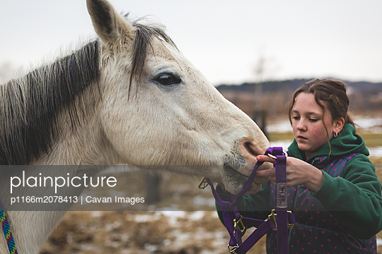 teen girl putting halter on a white horse - p1166m2078413 by Cavan Images